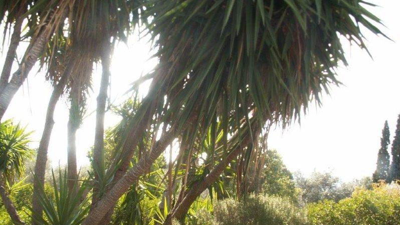 Κήπος Σπάροζα - Παιανία (2)