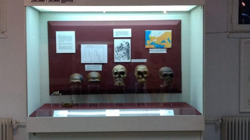 ΑΝΘΡΩΠΟΛΟΓΙΚΟ ΜΟΥΣΕΙΟ ΙΑΤΡΙΚΗΣ ΣΧΟΛΗΣ : Άποψη από τα εκθέματα του Μουσείου.