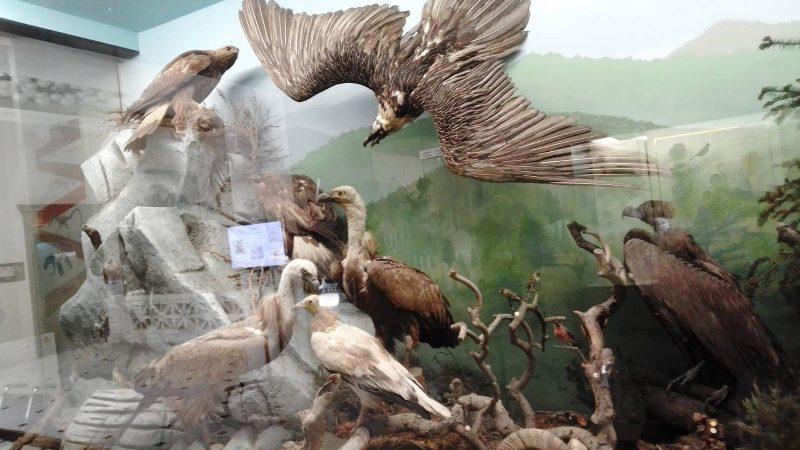 Αρπακτικά πουλιά του ελλαδικού χώρου